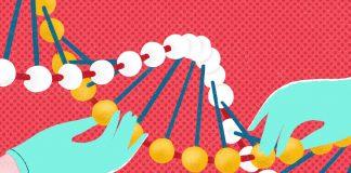 geneticheskie testy vivavita vitajournal