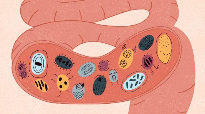 mikrobiom cheloveka vivavita vitajournal